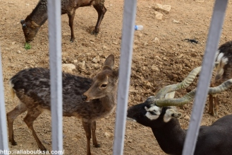 Riyadh Zoo (11)