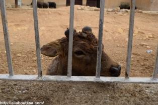 Riyadh Zoo (12)