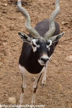 Riyadh Zoo (13)