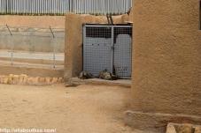 Riyadh Zoo - Hyena