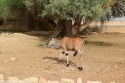 Riyadh Zoo (17)