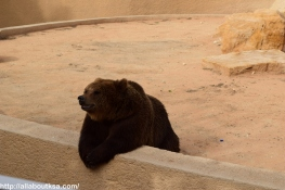 Riyadh Zoo - Bear