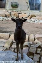 Riyadh Zoo (27)