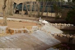 Riyadh Zoo (31)