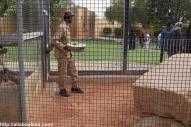 Riyadh Zoo - Lunch Time for animals