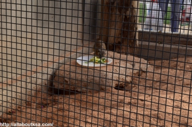 Riyadh Zoo (37)