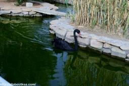Riyadh Zoo (39)