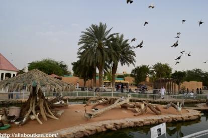 Riyadh Zoo (49)