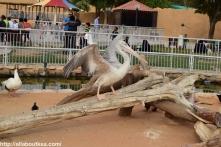 Riyadh Zoo (50)