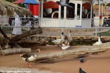 Riyadh Zoo (51)