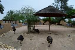 Riyadh Zoo (53)