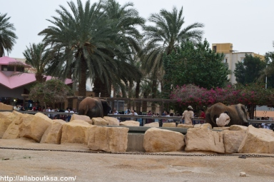Riyadh Zoo (54)