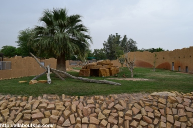 Riyadh Zoo - Cheetah