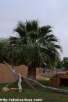 Riyadh Zoo (56)
