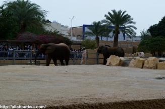 Riyadh Zoo - Elephant