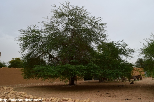 Riyadh Zoo (63)