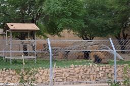 Riyadh Zoo (64)